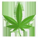 Meet the 1970's Cannabis Crew