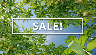Shop Sales at Ganja Outpost